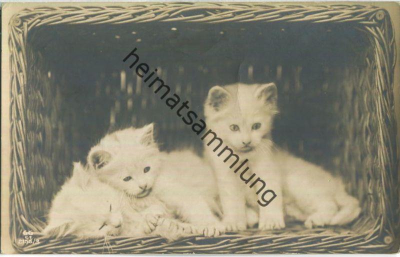 Drei Katzenkinder im Wäschekorb - Foto-Ansichtskarte