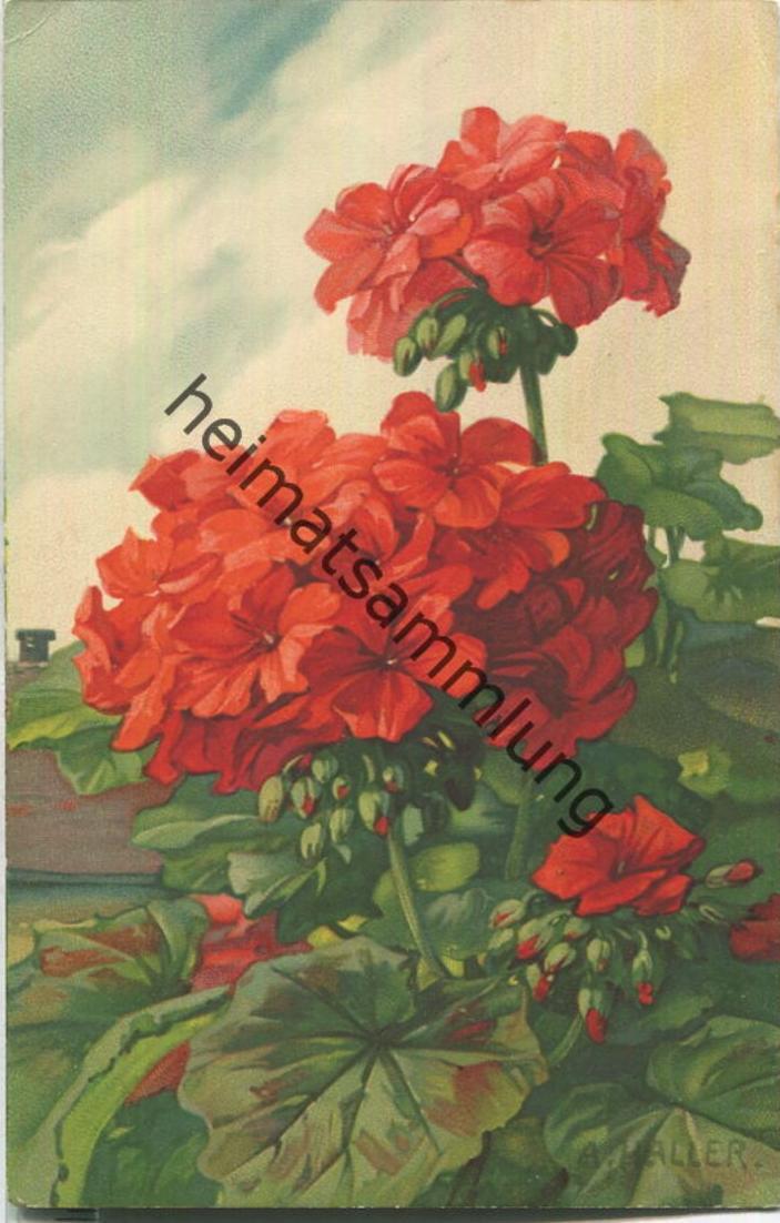 Anna Haller - Verlag Meissner & Buch Leipzig Serie 1963 - Geranium