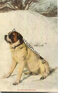 Bernhardinerhund - Edition Photoglob Co. Zürich ca. 1905