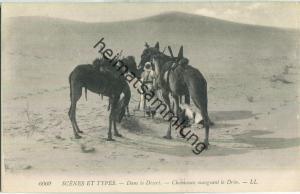 Scenes et Types - Dans les Desert - Chameaux mangeant le drin