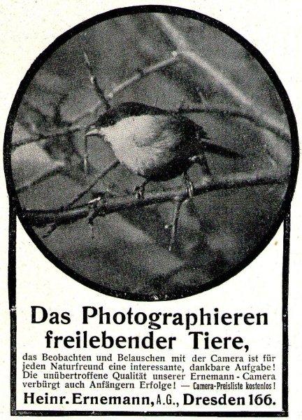 10 x Original-Werbung/ Anzeigen 1909 bis 1969 - VÖGEL - Größe unterschiedlich