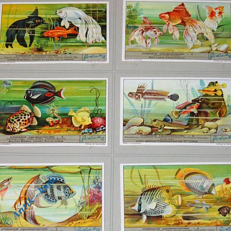 6 Liebig Chromos Bilder, S1339 , Uitheemsche Aquariumvisschen , Nr 1 bis 6 , kfr