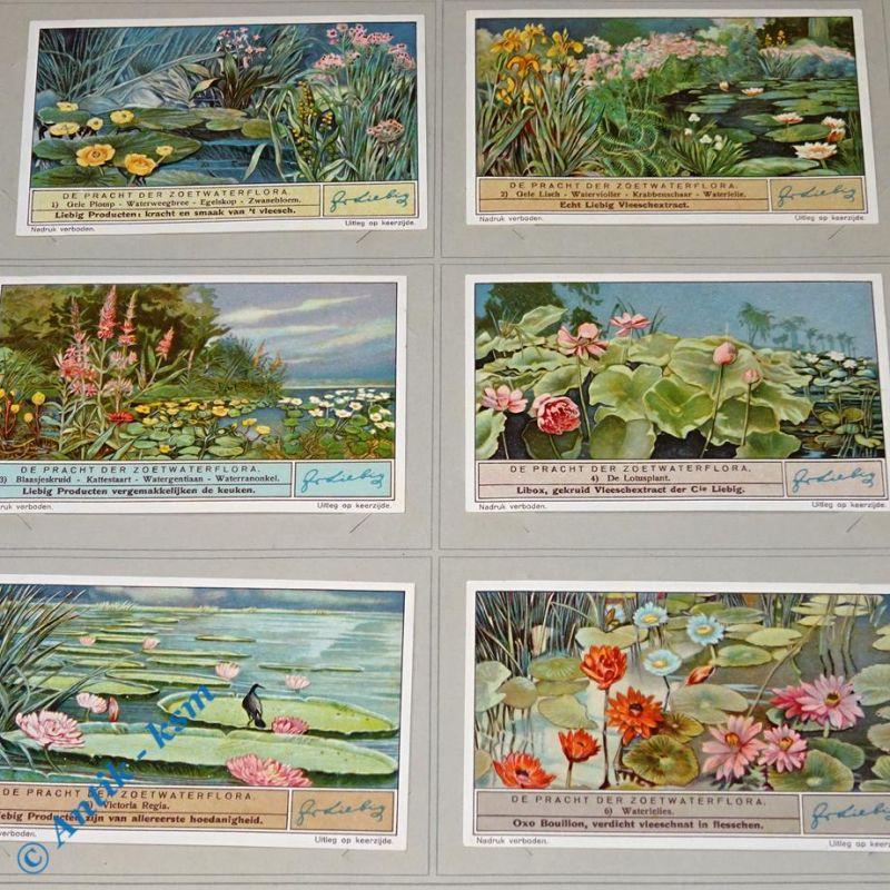 6 Liebig Chromos Sammlebilder, S1329 , De Pracht der Zoetwaterflora , Nr 1 bis 6 , kfr