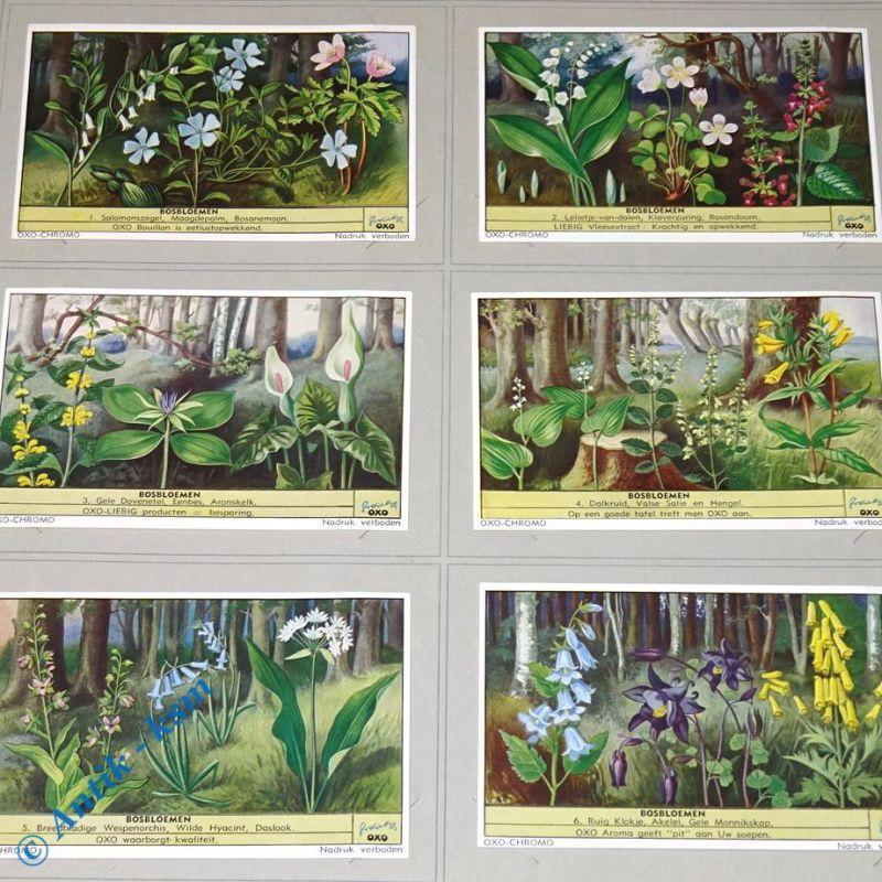 6 Liebig Chromos Sammlebilder, S1568 , Bosbloemen , Nr 1 bis 6 , kfr