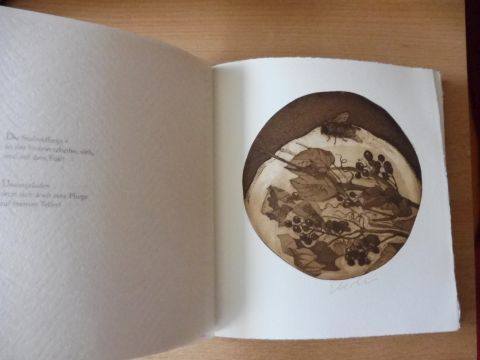Groißmeier, Michael und Claus Eberlein (Illustrator): Zwiegespräch mit einer Aster - Haiku mit Illustrationen von Klaus Eberlein. SONDERN-VORZUGSAUSGABE mit 17 eingebundenen signierten ORIGINAL-RADIERUNGEN * VON KLAUS EBERLEIN. + 2 AUTOGRAPHEN.
