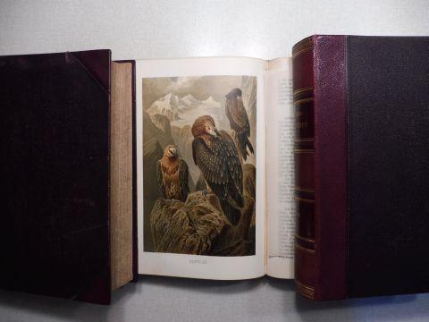 Pechuel-Loesche, Prof. Dr., Dr. Alfred E. Brehm und Dr. Wilh. Haacke (Mitwirkung): Die Vögel. 3 Bände - Halbleder-Ausgabe (schön erhalten) *.