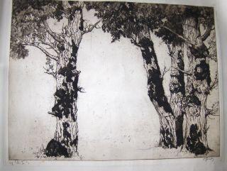 OSKAR GRAF *. Gr.-ORIGINAL -RADIERUNG (leicht braun.-Aquatintaradierung): (ohne Titel) 3 Bäume mit Äste (Expressionistisch !). Signiert unten rechts - Keine numer., warscheinlich Probe-Exemplar.