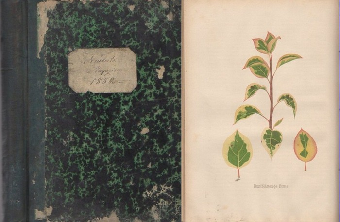 Deutsches Magazin für Garten- und Blumenkunde. - / Neubert, Wilhelm (Hrsg.): Deutsches Magazin für Garten- und Blumenkunde. Zeitschrift für Garten- und Blumenfreunde, und Gärtner. Jahrgang 1880. 0