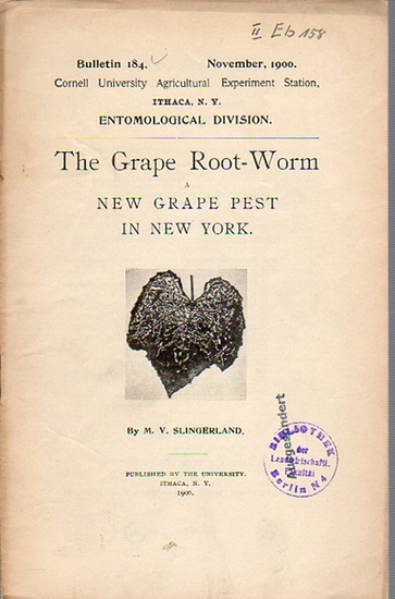 Slingerland, M. V.: The Grape Root-Worm a New Grape Pest in New York. (= Bulletin 184, November, 1900. Cornell University Agricultural Experiment Station, Ithaca, N. Y. Entomological Division).