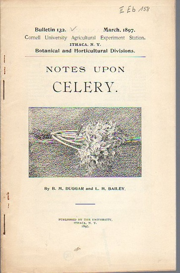 Duggar, B. M. and Bailey, L. H.: Notes upon Celery. (= Bulletin 132, March, 1897. Cornell University Agricultural Experiment Station. Ithaca, N. Y. Botanical and Horticultural Divisions). 0