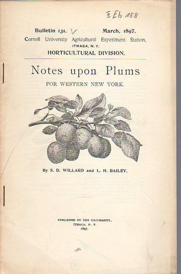 Willard, S. D. and Bailey, L. H.: Notes upon Plums for Western New York. (= Bulletin 131, March, 1897. Cornell University Agricultural Experiment Station. Ithaca, N. Y. Horticultural Division.). 0