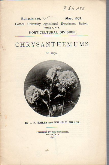 Bailey, L. H. and Miller, Wilhelm: Chrysanthemums of 1896. (= Bulletin 136, May, 1897. Cornell University Agricultural Experiment Station. Ithaca, N. Y. Horticultural Division.). 0