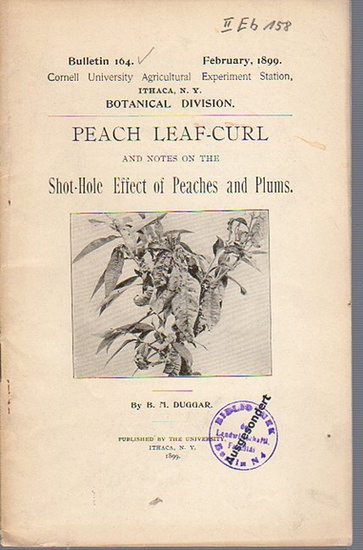 Duggar, B. M.: Peach Leaf-Curl and notes on the Shot-Hole Effect of Peaches and Plums. (= Bulletin 164, February, 1899. Cornell University Agricultural Experiment Station. Ithaca, N. Y. Botanical Division.).