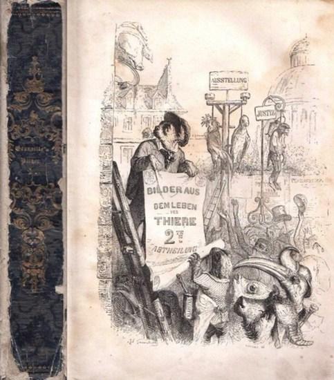 Grandville. [Balzac, Honore de ; Musset, Paul de ; Sand, George u.a. -Mitarbeit ] Diezmann, Johann August (Hrsg.): Bilder aus dem Leben der Thiere. Zweite Abtheilung. Mit 104 Holzschnitten.
