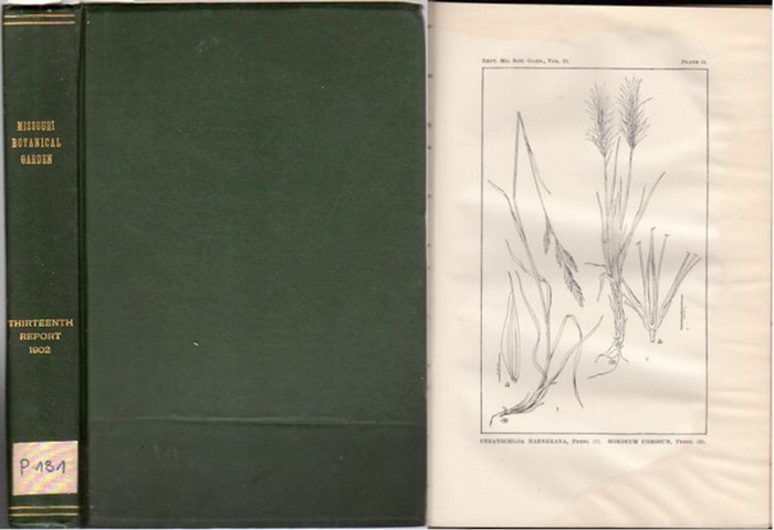 Missouri Botanical Garden. - Trelease, William: Missouri Botanical Garden. Thirteenth Annual Report. Scientific Papers: The Yucceae. - by William Trelease.