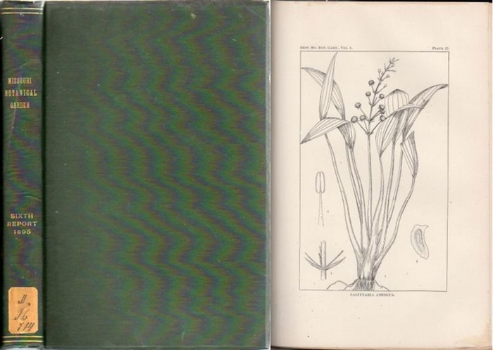 Missouri Botanical Garden. - Jared G. Smith / William Trelease / Herbert J. Webber / B. F. Bush: Missouri Botanical Garden. Sixth Annual Report. Scientific Papers: Revision of the North American Species of Sagittaria and Lophotocarpus - By Jared G. Smith