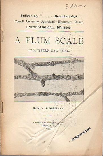 Slingerland, M. V.: A Plum Scale in Western New York. (= Bulletin 83, December, 1894. Cornell University Agricultural Experiment Station. Entomological Division).