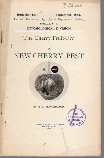 Slingerland, M. V.: The Cherry Fruit-Fly a New Cherry Pest. (= Bulletin 172, September, 1899. Cornell University Agricultural Experiment Station, Ithaca N. Y. Entomological Division).