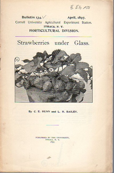 Bailey, L. H. and Hunn, C. E.: Strawberries under Glass. (= Bulletin 134, April, 1897. Cornell University Agricultural Experiment Station. Ithaca, N. Y. Horticultural Division.).
