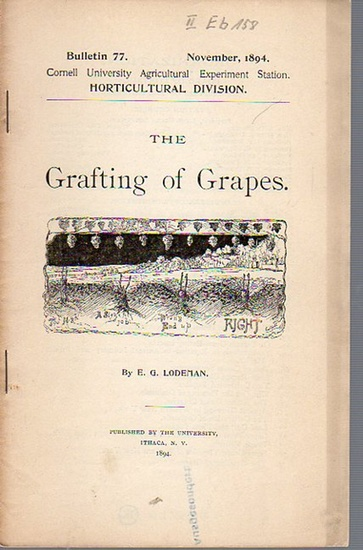 Lodeman, E. G.: The Grafting of Grapes. (= Bulletin 77, November, 1894. Cornell University Agricultural Experiment Station. Horticultural Division.).