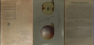 Stromberg, L. (Zeichner): Anbauwürdige Obstsorten. 52 Tafeln in zwölffarbigem Druck mit beschreibendem Text.