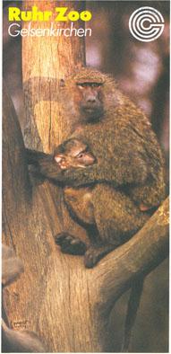 Ruhr-Zoo Gelsenkirchen Faltblatt (Affenmutter mit Baby)