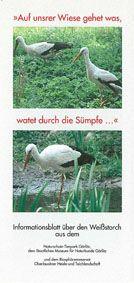 Tierpark Görlitz Informationsblatt über den Weißstorch