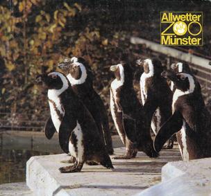 Allwetterzoo Münster Zooführer (Brillenpinguine)