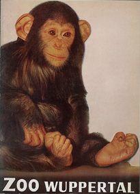 Zoo Wuppertal Zooführer (Schimpanse) (90 Jahre)