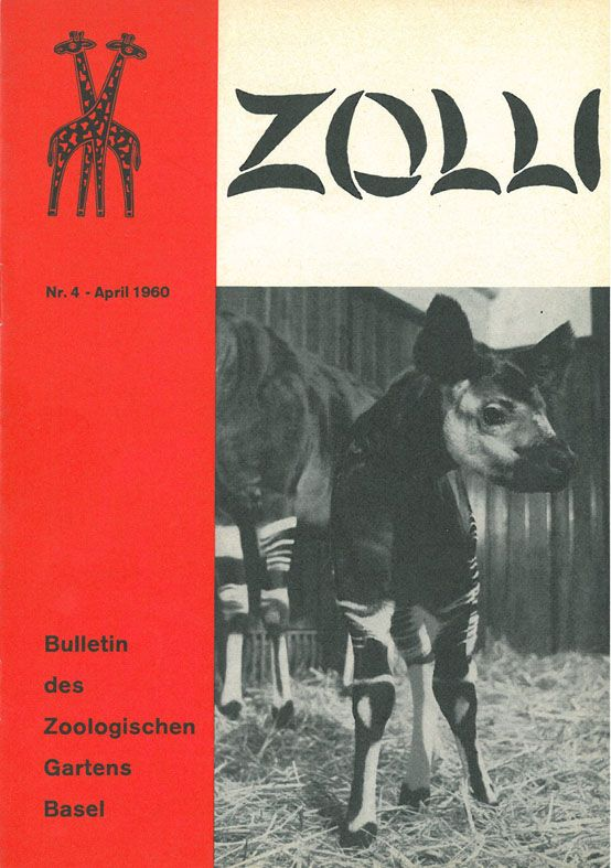Zoo Basel Zolli Bulletin Nr. 4 April 1960