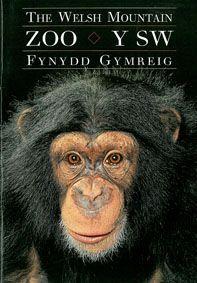 The Welsh Mountain Zoo Colwyn Bay Führer (Schimpanse) 0