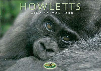 Howletts (Kent) Official Brochure (junger Gorilla)
