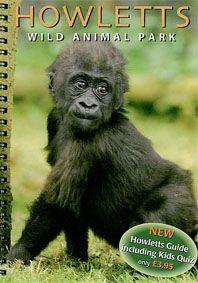 Howletts (Kent) Guide (junger Gorilla) mit Lageplan