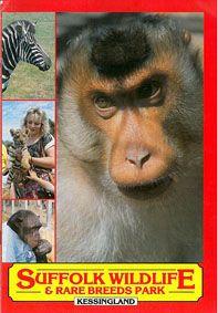 Suffolk Wildlife & Rare Breeds Park Guide Book (3 kleine, 1 großes Bild)