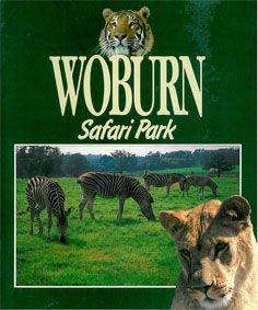 Woburn Wild Animal Kingdom and Leisure Park Woburn Safari Park (Foto von grasenden Zebras)