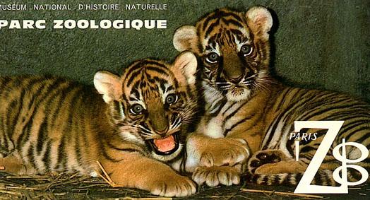 Museum National d'Histoire Naturelle Parc Zoologique de Paris, Zooführer (junge Tiger)
