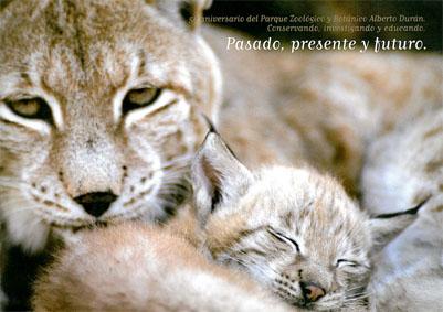 "Zoo Jerez Imagebroschüre 50-jähriges Jubiläum ""Pasado, presente y futuro"""