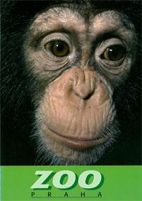 Zoo Prag, Tschechien Zooführer (Schimpanse)