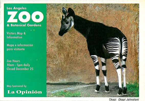 Los Angeles Zoo & Botanical Gardens Visitors Map & Information (Okapi)
