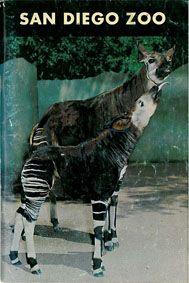 San Diego Zoo Zooführer (Okapis)