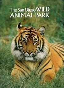San Diego Wild Animal Park Zooführer (Tiger)
