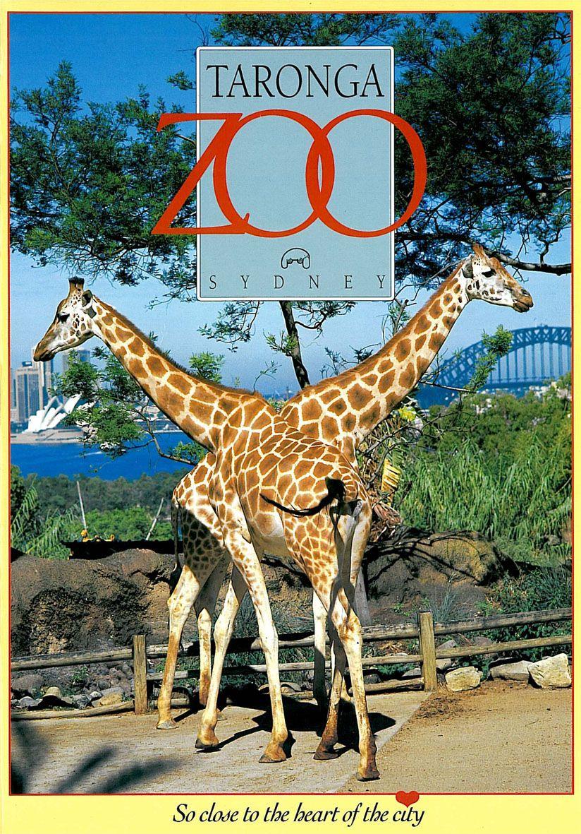 "Taronga Zoo Guide & Map (Giraffen) ""So close to the heart of the city"""