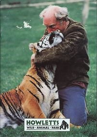 Howletts (Kent) Wild Animal Park (Aspinall umarmt Tiger)