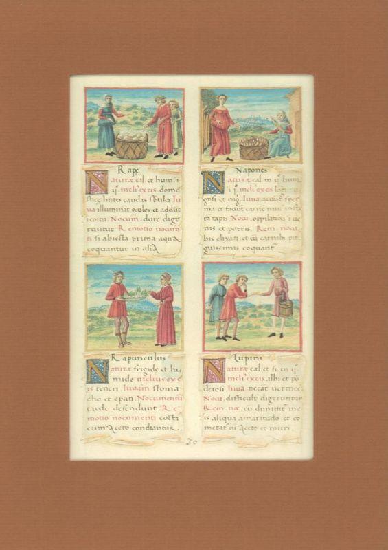 Tacuinum sanitatis. (Codex vindobonensis 2396. Dokumentation zur Faksimileausgabe LXXVIII in der Reihe Codices Selecti.