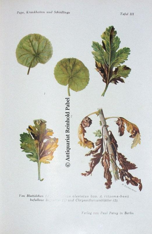Die Praxis der Bekämpfung von Krankheiten und Schädlingen der Zierpflanzen. 2., neubearb. u. erweit. Aufl.