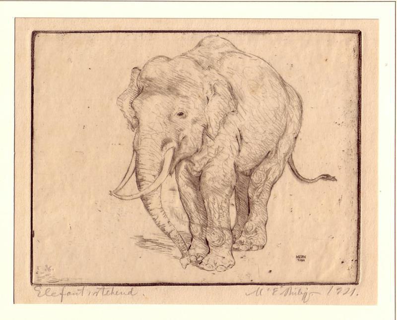 Philipp, Martin Erich (1887-1978). Elefant, stehend. Kaltnadelradierung von M. E. Philipp, unterhalb der Darstellung vom Künstler hs. bezeichnet, signiert u. datiert.