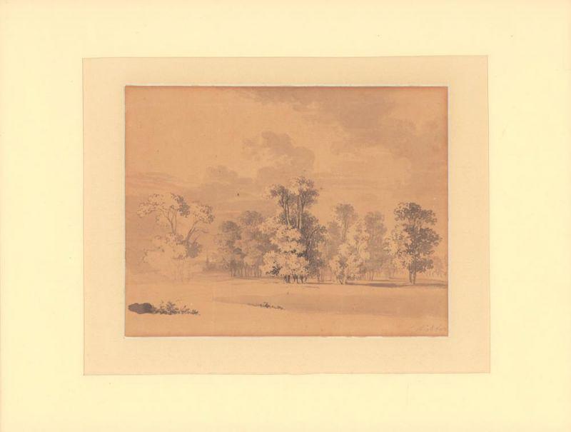 Richter, (Adrian) Ludwig (1803 - Dresden - 1884) zugeschrieben. [Eichenhain mit Sommerwolken]. Sepia- und Tuschezeichnung, teils über Bleistift laviert, auf Papier.