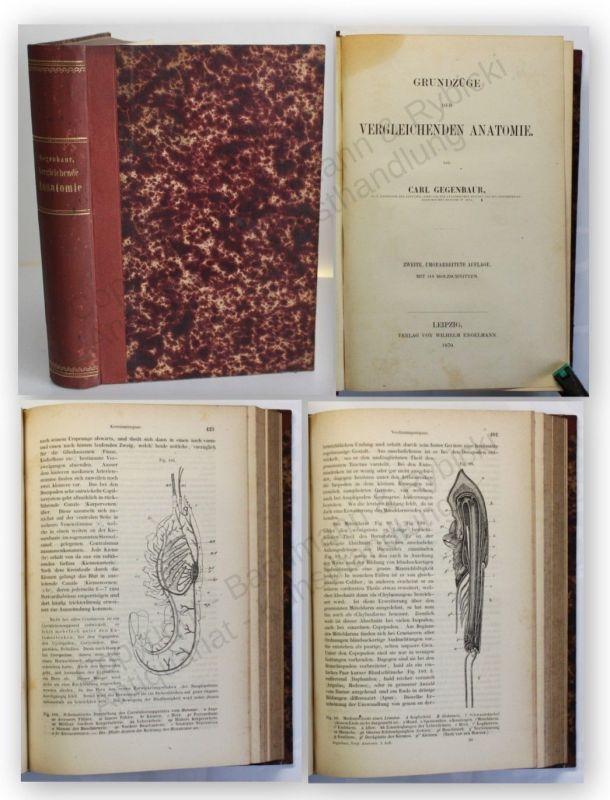 Gegenbaur Grundzüge der vergleichenden Anatomie 1870 Medizin Wissen Studium xy