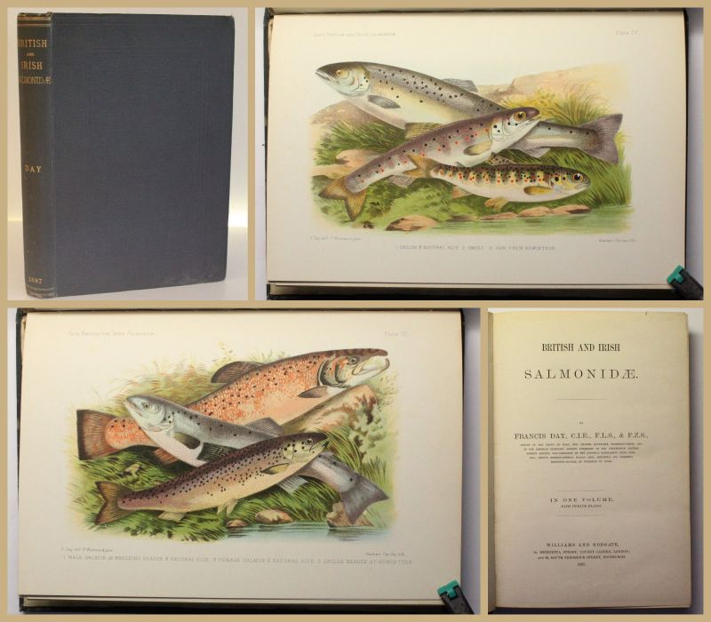 Day British and Irish Salmonidae. In one volume 1887 Ichtyologie Fischkunde xy