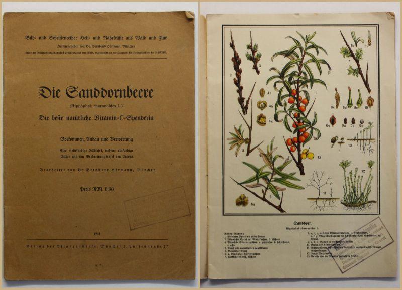 Hörmann die Sandornbeere 1941 Natur Pflanze Wissen Anbau Verwertung Fachbuch sf